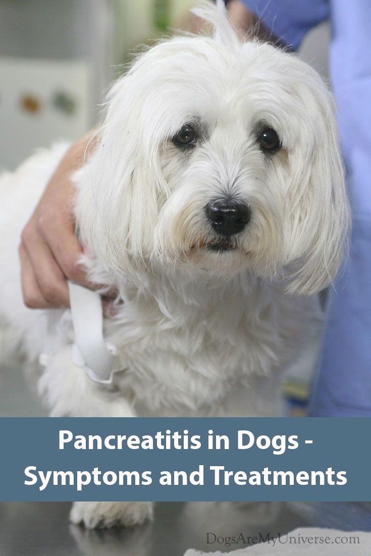 Dogs And Pancreatitis Pancreatitis In Dogs Dogs Canine