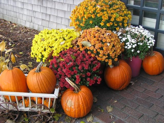 Mums and pumpkins at the door