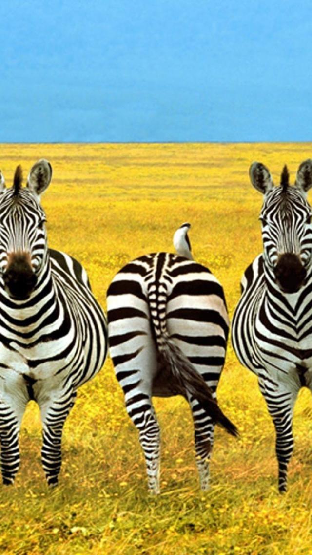 ☀Charming Zebra in Prairie