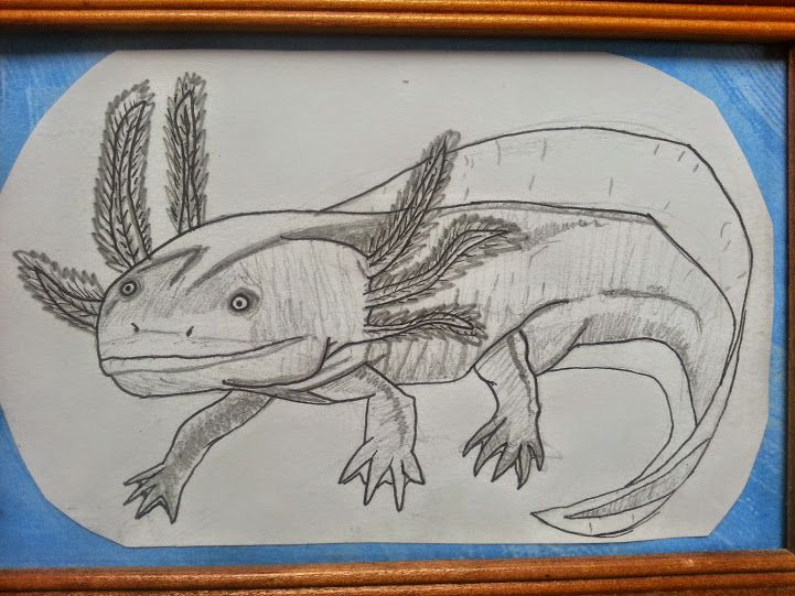 Axolotl by Emily Christensen