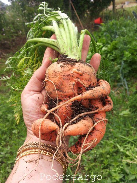 Carote dell'#ortosinergico #carotts #vegetables