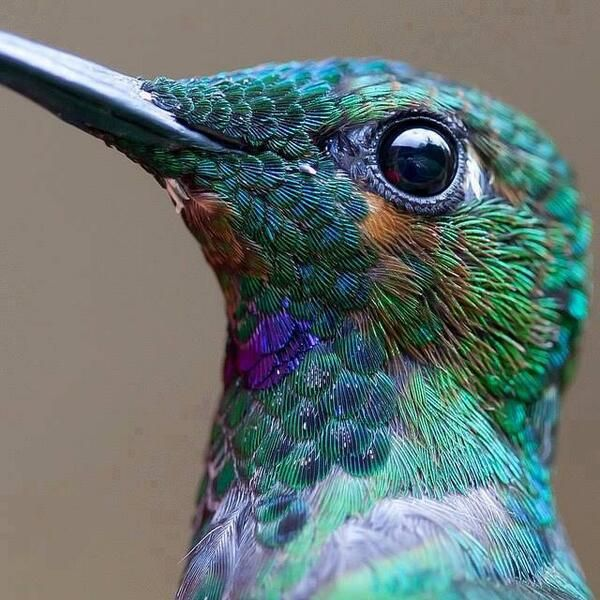 This is what a hummingbird looks like close up