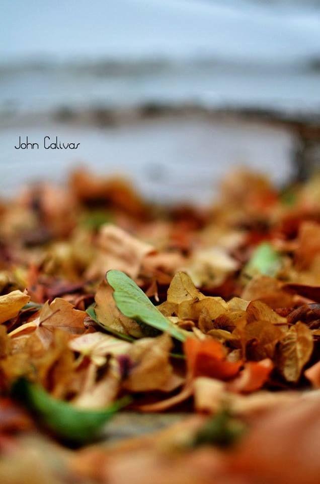 Πότε ήταν η τελευταία φορά που κοίταξες το ηλιοβασίλεμα ή απλά σταμάτησες να δεις τον ουρανό?? Σε όποιο σημείο της Πάρου και αν σταματήσεις, πάντα υπάρχει ένας καλός λόγος να κάνεις ένα φθινοπωρινό περίπατο ανάμεσα στα χρυσαφένια φύλλα των δένδρων που στροβιλίζονται πέφτοντας , να εισπνεύσεις τις μυρωδιές που σου δίνονται απλόχερα, το κύμα που κτυπάει στα βράχια νιώθοντας το θαλασσινό αέρα στο δέρμα σου.