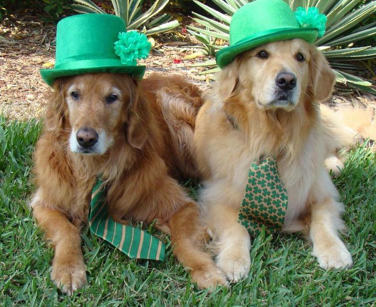 Seriously... Do I look like an Irish Setter to you? Oh