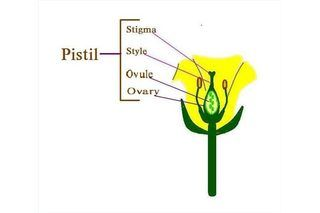 Diagram of the Parts of a Flower | eHow