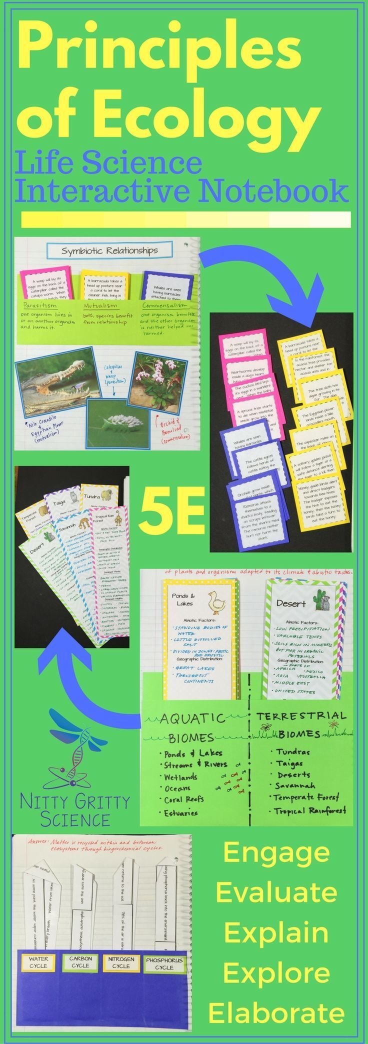 Principles of Ecology, Life Science Interactive Notebook include the following concepts: •Nutrition and Energy •Energy Flow in Ecosystems •Cycles in Nature •Organisms and Their Environment •Ecological Succession •Biomes Nitty Gritty Science