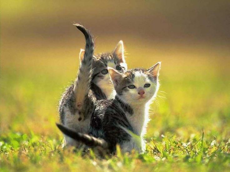 cats | Cool And Funny Cats Wallpapers Pictures | Funny Cat Videos And ...