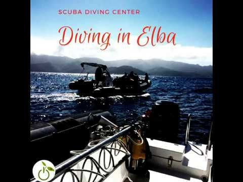 Diving in Elba #greenwhereabouts #divingcenter #scubadiving #scuba #diving #sea #marinelife