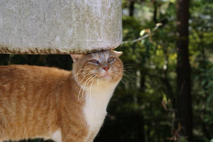 今日の猫ちゃん(やあ!ご機嫌かい?)の画像   いつもの猫通り