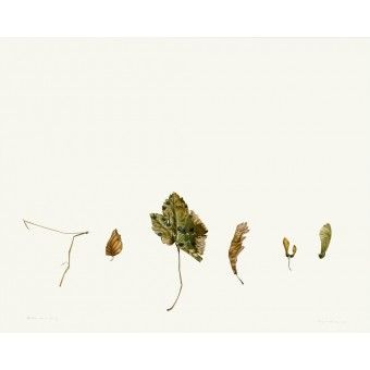 rory-mcewen-true-facts-of-nature-botanical-art-print