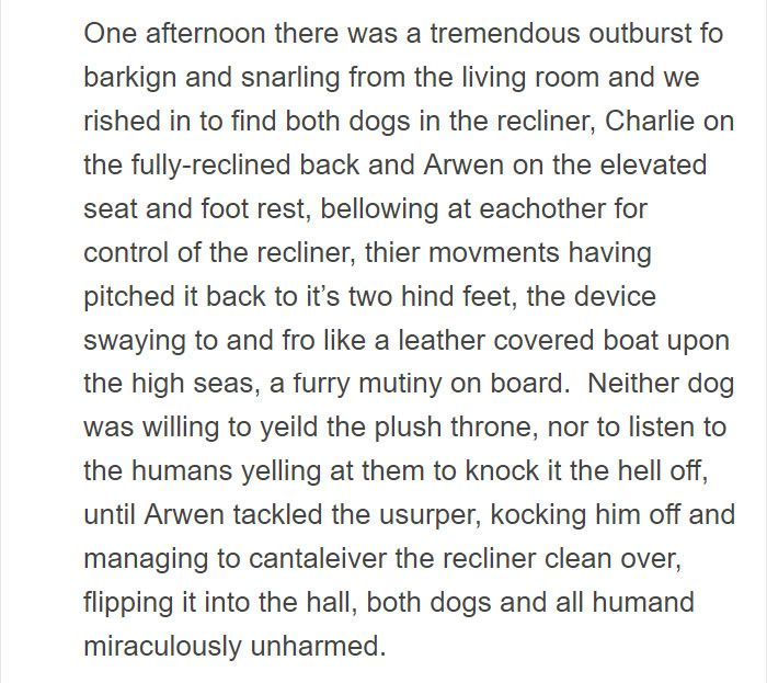 Person Gets A Service Dog Trained In Prison Discovers How Naughty