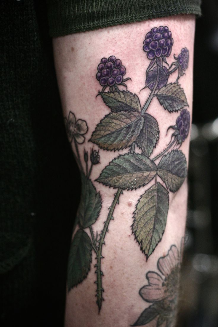 Blackberries botanical illustration tattoo by Alice Carrier at Wonderland Tattoo in Portland, Oregon.