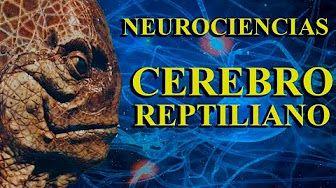 Neurociencias, Cerebro Reptiliano, Límbico y Neocortex