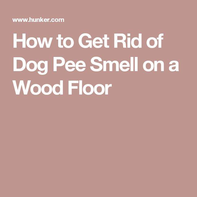 Best 25 Pee Smell Ideas On Pinterest Pet Urine Cleaner