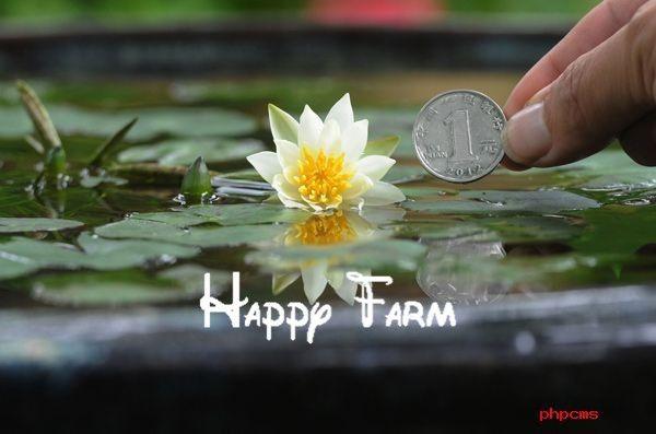 Aquatic plants blossom mini Water lily seeds Miniature lotus Bonsai plants Seeds for home & garden 15 seeds/bag