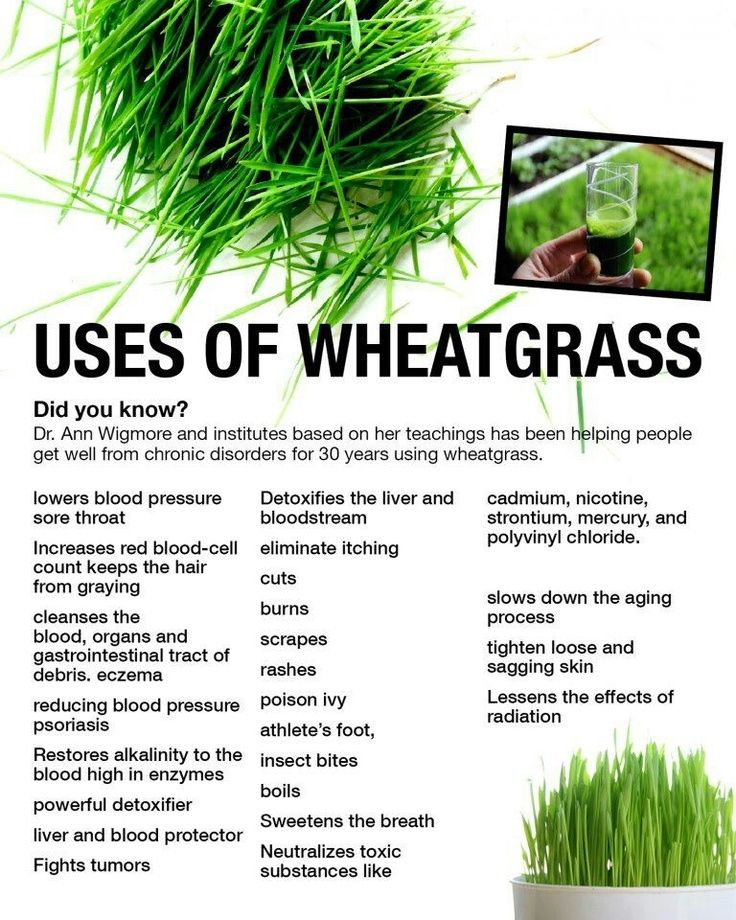 Growing wheatgrass to about seven inches tall is optimum for its health benefits. Simply place selected grain in about one-inch of organic soil to enjoy one of the most cleansing and nutritious juices available.