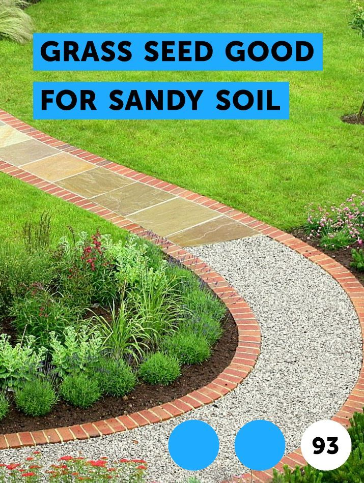 Grass Seed Good For Sandy Soil Plants Growing Tomatoes Sandy Soil