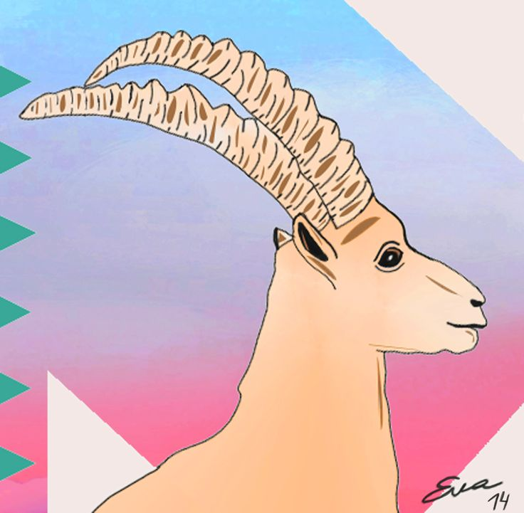 Eva Mirror Illustrations 2014 Ibex Alp by Eva Mirror