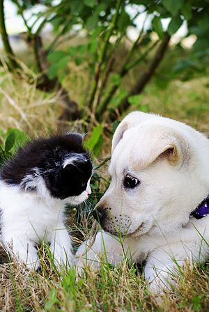 Staring contest: Puppies, Animal Baby, Best Friends, Dogs Cat, Pets Treats, Baby Animal, Baby Dogs, Pets Food, Baby Cat