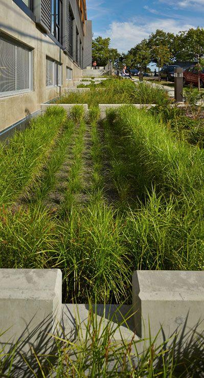17 best images about garden bioswale raingarden on for Garden design internship