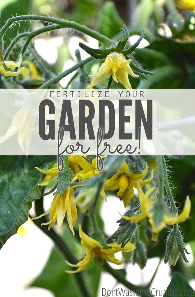 50 Ways to Fertilize the Garden For Free - from leftover food to common plants to animal parts, a great list of free & effective fertilizers for the garden using what you already have. Save money while growing your own food!! :: DontWastetheCrumbs.com