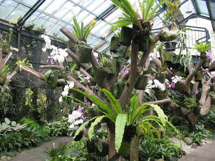 Orchids in Bogor Botanical Gardens, Indonesia