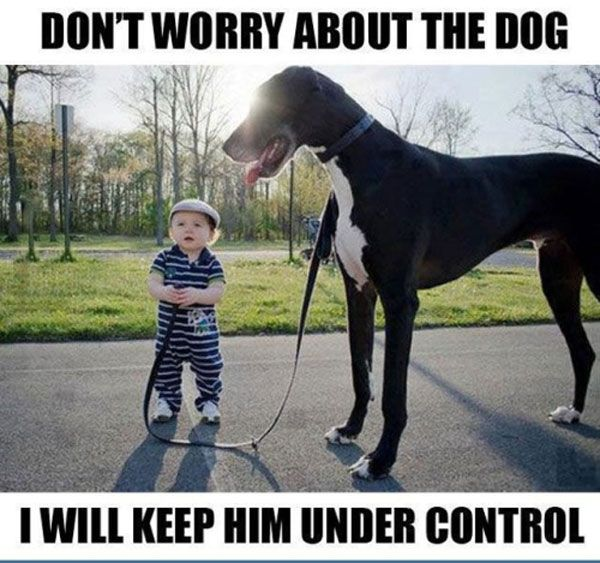 Funny Animal Pictures With Captions Check out the website to see more                                                                                                                                                     More