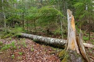 pei forestry - Ecosia