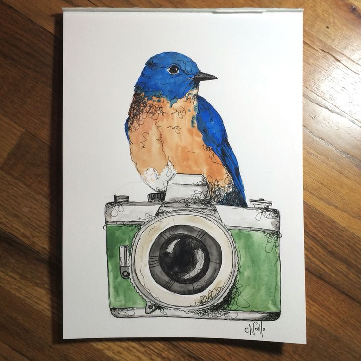 "Blue bird on 11""x15"" watercolor paper. For sale"
