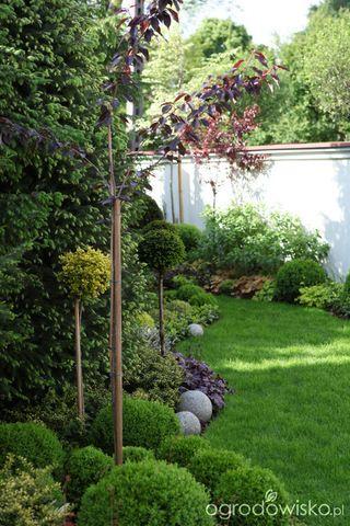 Galeria zdjęć - Żurawki - liście zamiast kwiatów - Ogrodowisko