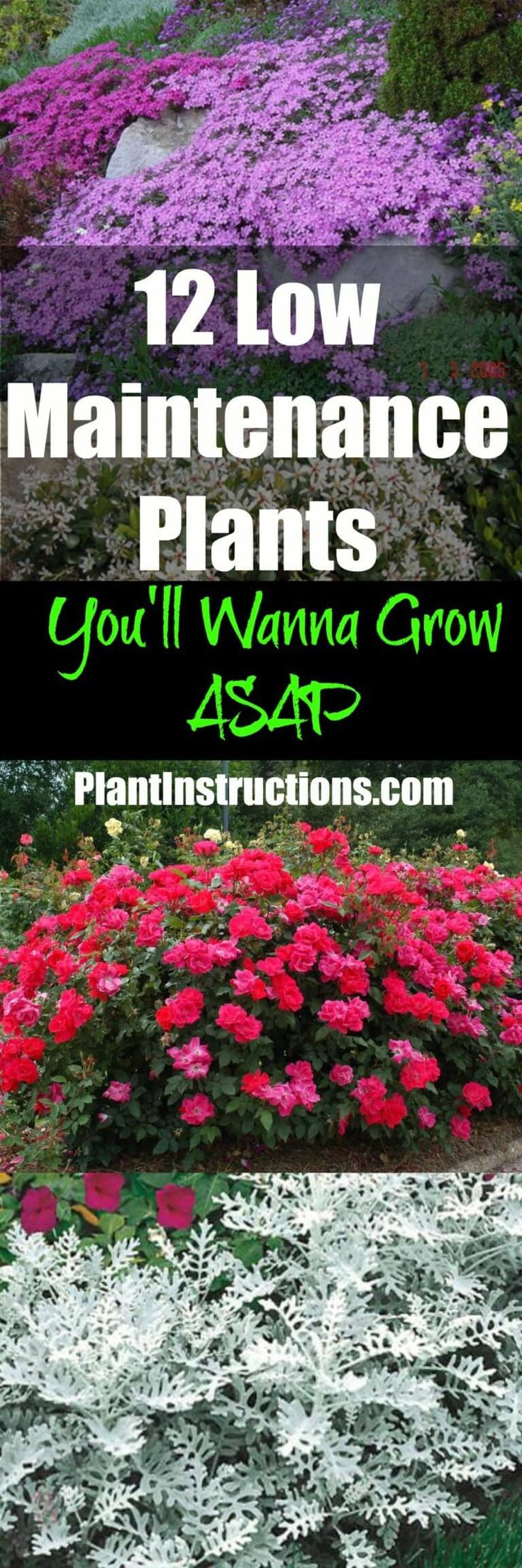 Best 25 low maintenance shrubs ideas on pinterest low for Best low maintenance plants