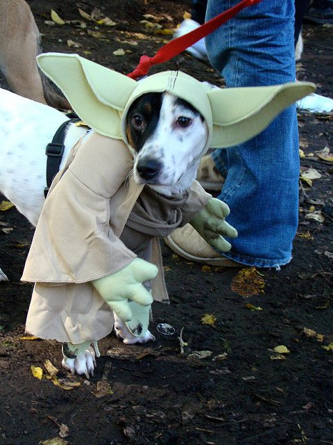 This Yoda dog costume is the perfect Halloween investment for dog lovers/Star Wars fans.  www.ultimatecostumeideas.com