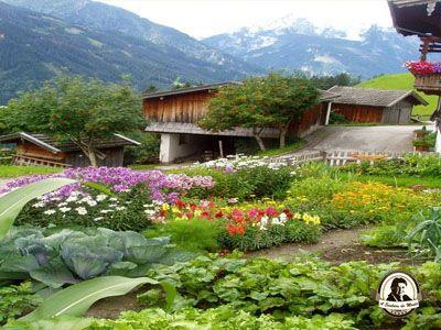 Jardim comestível
