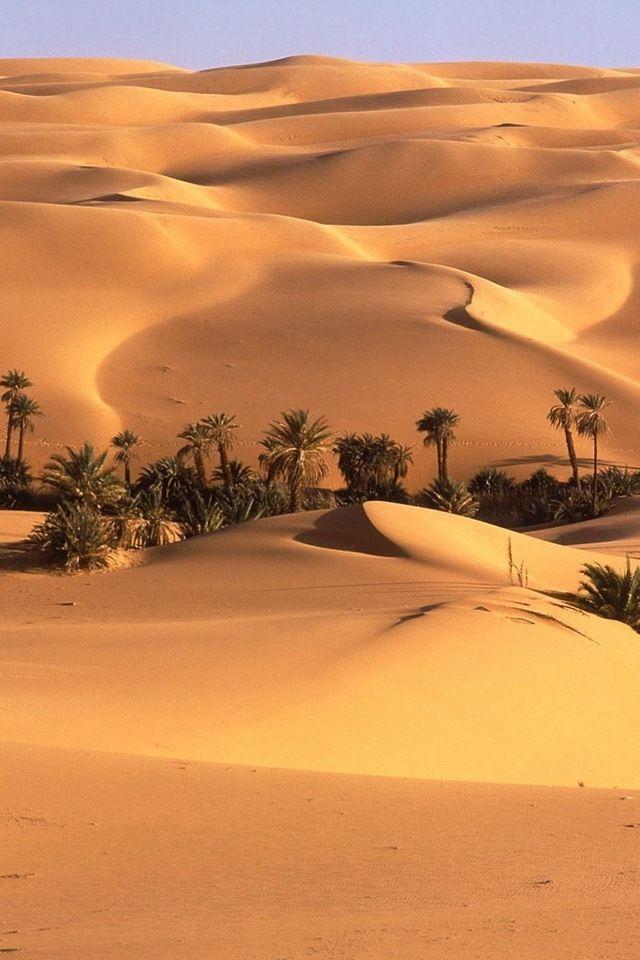 Not sure what this means, but better not delete :)  -   Des régions de végétation sont des régions dans la monde qui a une climat qui est distinct. Les déserts, les prairies, les forêts, le toundra et les calotte glacièrs sont toute les exemples des régions de végétation. J'ai choisis un photo d'un désert parce que c'est une exemple des régions de végétation.