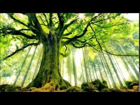 Druidská stromová meditace - YouTube