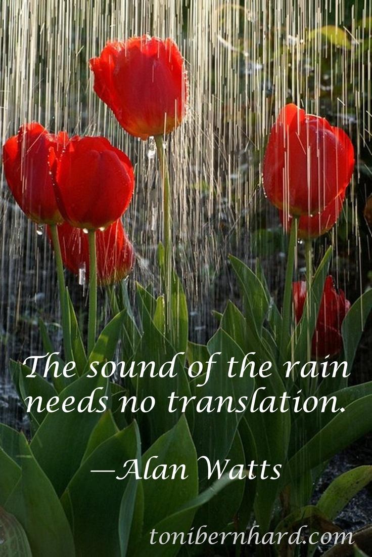 """The #sound of the #rain needs no translation."" #Alan #Watts                                                                                                                                                     More"
