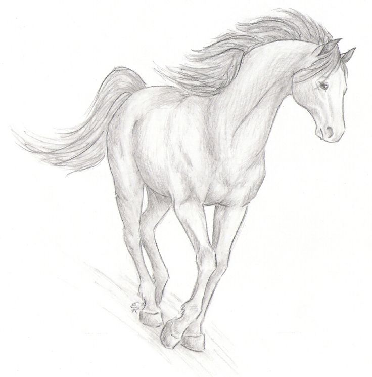 15 best horse sketches images on pinterest horses horse