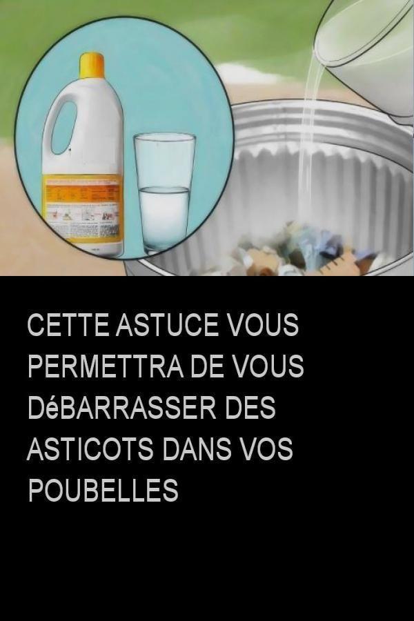 Quel Insecticide Pour Les Asticots : insecticide, asticots, Astuces, Maison