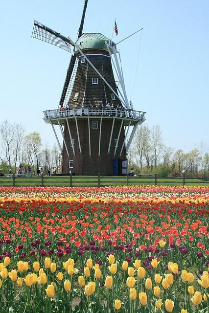 Tulips, Holland, Michigan.  Photo: Kathy~, via Flickr