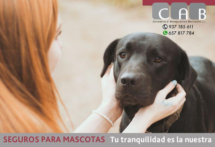 #Seguro para #Mascotas - Pólizas con coberturas de gastos veterinarios y Responsabilidad Civil y Daños. #CABcorredoriaSegurosBaricentroSeguro para Mascotas - Blog de CAB Corredoria Seguros Baricentro