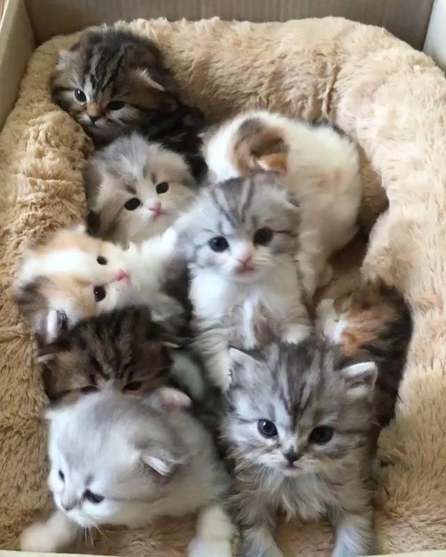 Box Full Of Fluffy Kittens Cute Fluffy Kittens Kittens Cutest Baby Cats