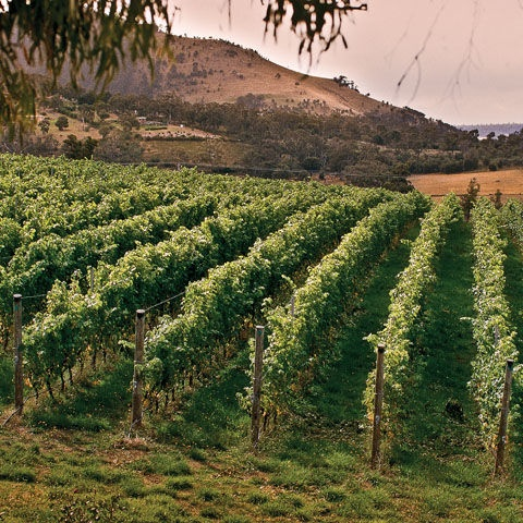 Domaine Vineyard, Launceston, Tasmania