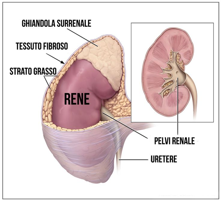 Le patologie dei surreni: http://www.forumsalute.it/community/forum_93_parola_al_medico/thrd_150406_le_patologie_dei_surreni_1.html?utm_source=social&utm_medium=pinterest&utm_campaign=forum