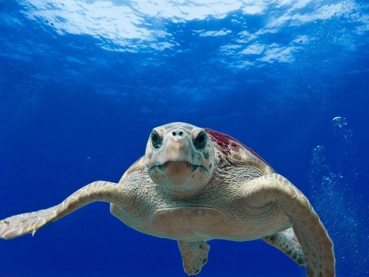 Simpatica e affascinante, è la tartaruga acquatica #turtle #acquario #fishtank