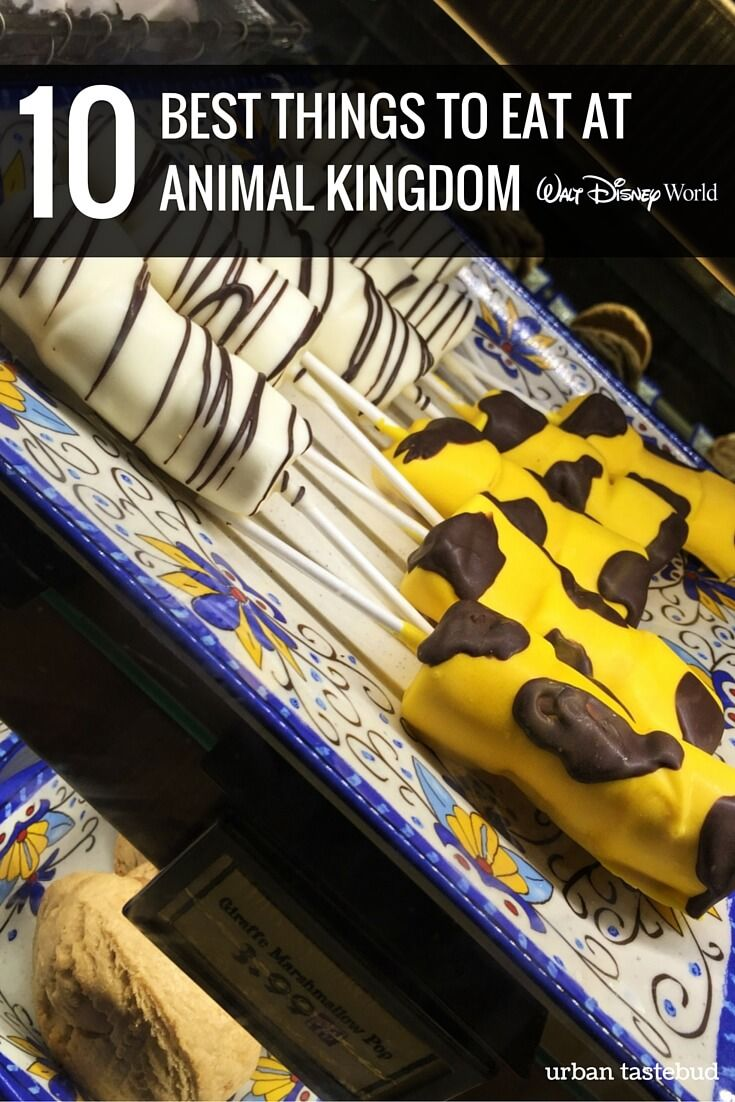 Best Things to Eat at Animal Kingdom