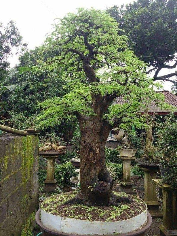 30 Creative Bonsai Trees Gardening Ideas For Backyard Large