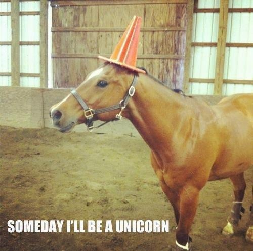 KEEP TRYING PONY!!!! YOU WILL SUCCEED IN BECOMING A UNICORN!!!!!!!!!!!!!!!!!!!!!!!!!!!!!!!!!!!!!!!!!!!!!!!!!!!!!!!!!!!!!!