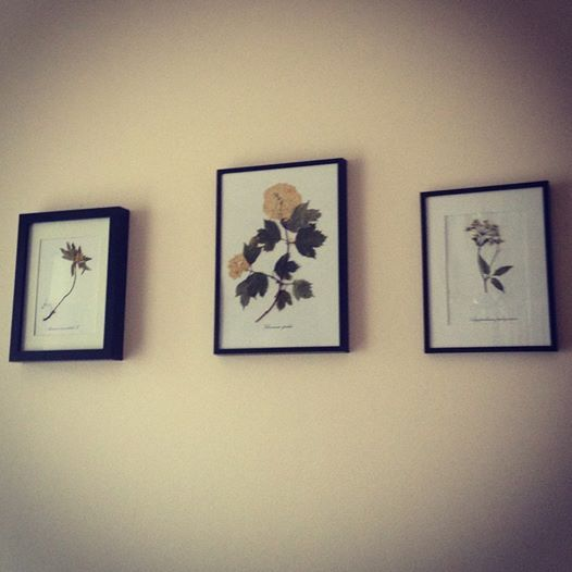 Flora Concept on the wall