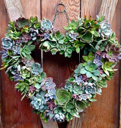 Living succulent heart wreath: