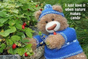 Tor the Bear, Norway, strawberry, candy, teddybear, play, inspiration, quotes